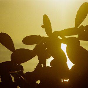 Cactus - Kodak Farbwelt 400, Chinon CM4s, October 2017